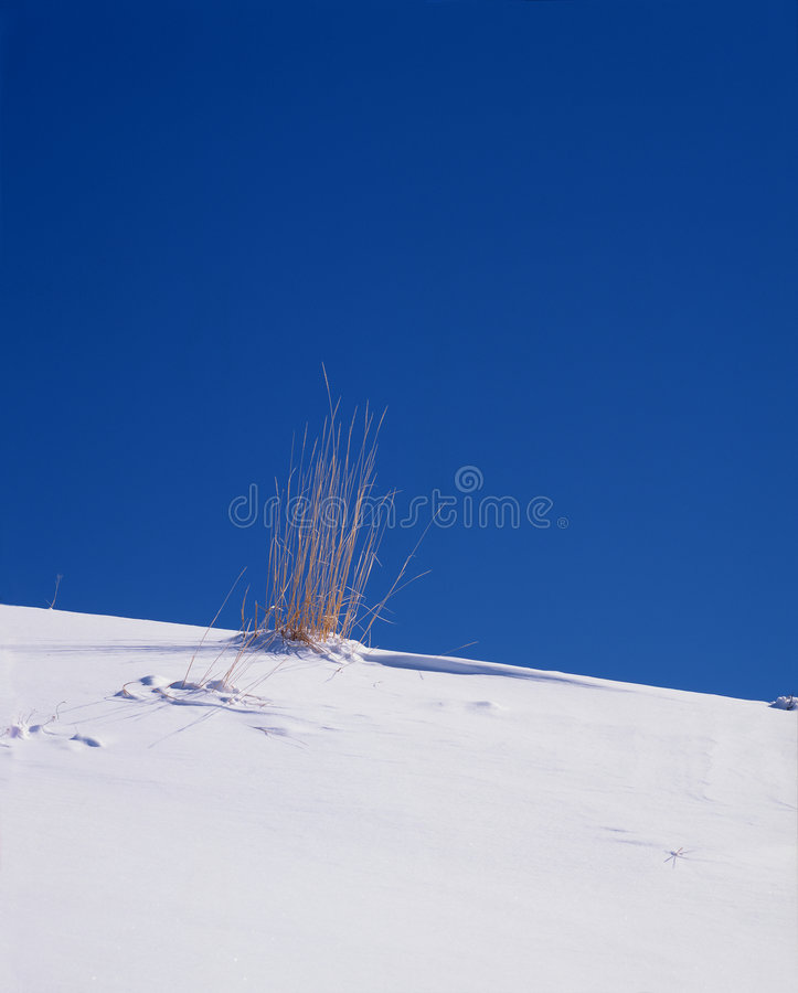 Grass in snow royalty free stock photos