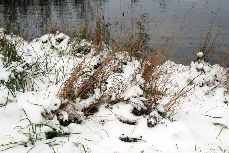 Download Grass In Snow Stock Photo - Image: 83706450