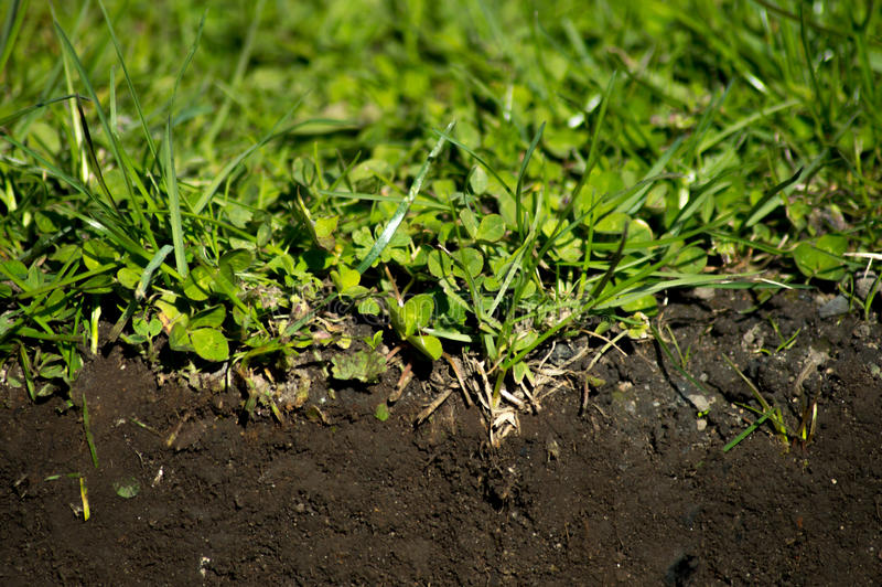 Grass and soil royalty free stock photography