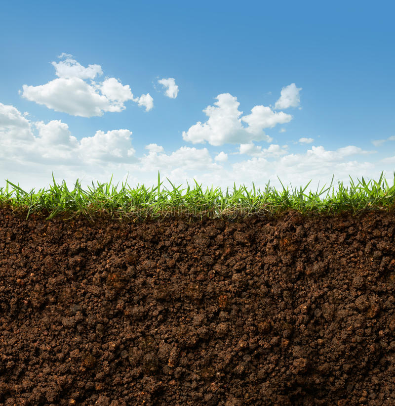 Grass and soil. Cross section of grass and soil against blue sky