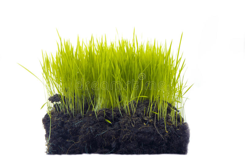 Grass with soil. Isolated on white stock photos