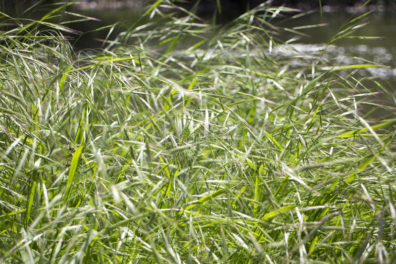 Grass in spring, color of the life stock photography