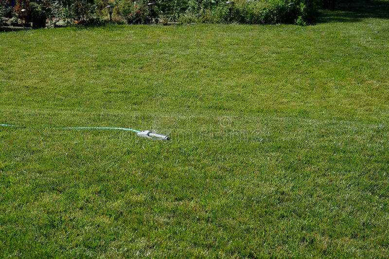 Grass and sprinkler. A manual sprinkler on green fescue lawn watering the grass stock images