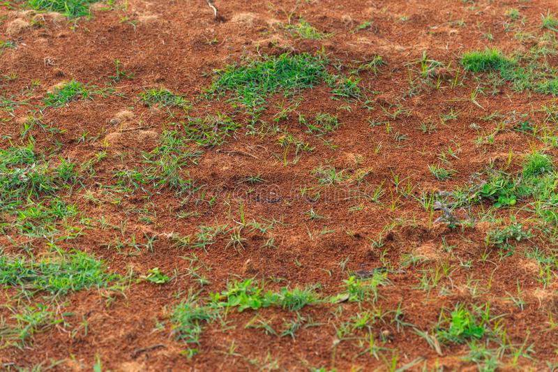 Grass sprout grown from fertile soil. Pattern texture background stock photo