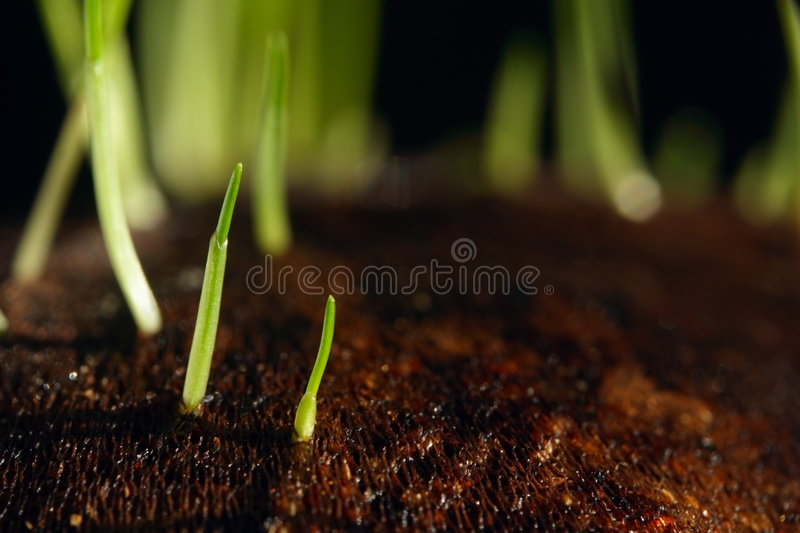 Download Grass sprouts stock image. Image of blooming, dirt, forest - 4450027