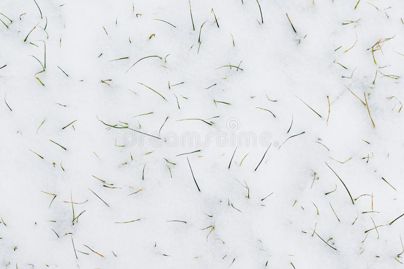 Grass sprouts stick out from under the snow. The ground is covered with snow. Grass sprouts stick out from under the snow royalty free stock images
