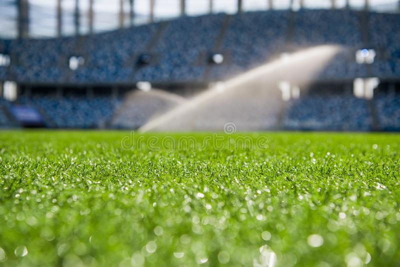 Grass on stadium in sunlight. Closeup of a green football field. Wet stadium grass in the morning light during watering royalty free stock photos