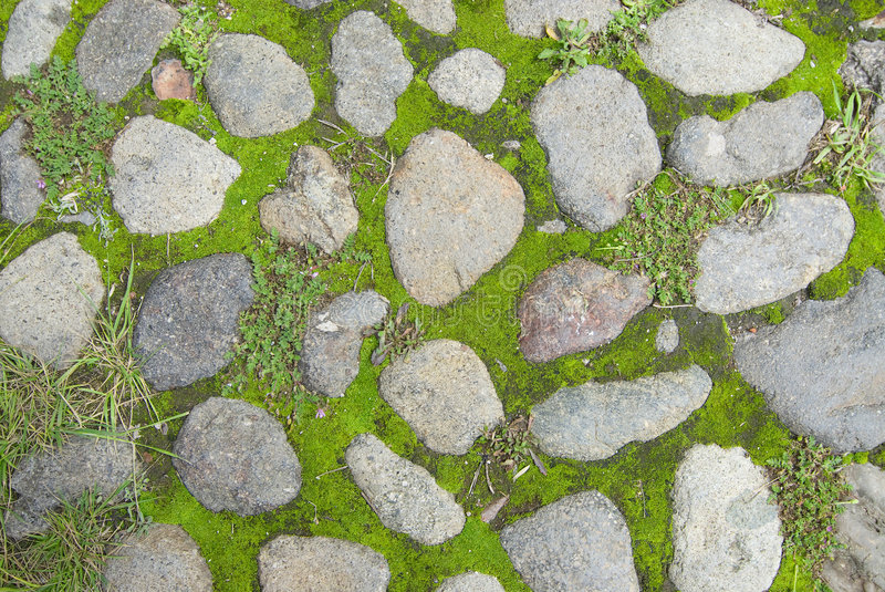 Grass And Stone Texture Stock Images Image 5455884
