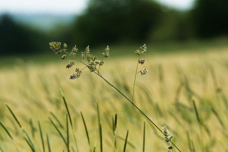 Grass Summer Field royalty free stock photos