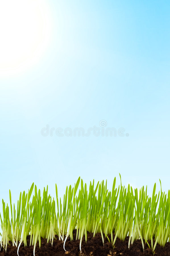 Download Grass And Sun Stock Photos - Image: 4676183