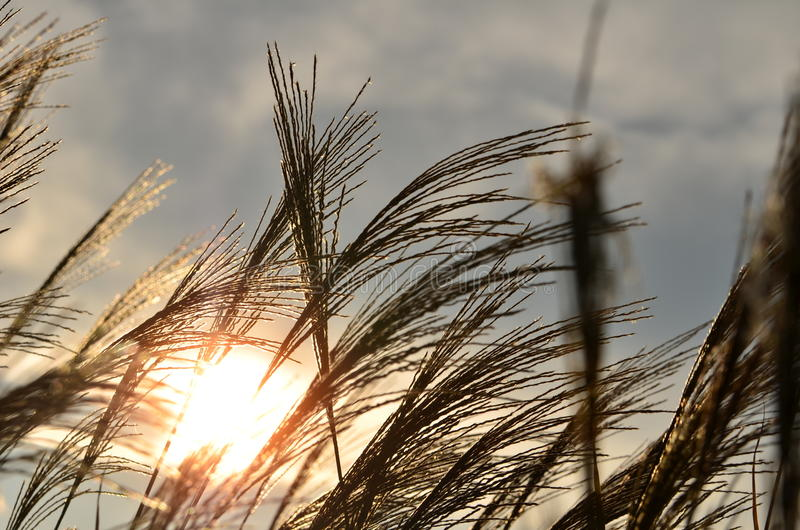 Grass and sun background royalty free stock photography