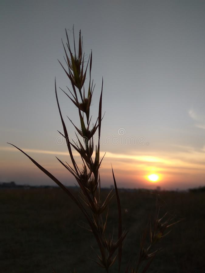A grass with sun royalty free stock photo
