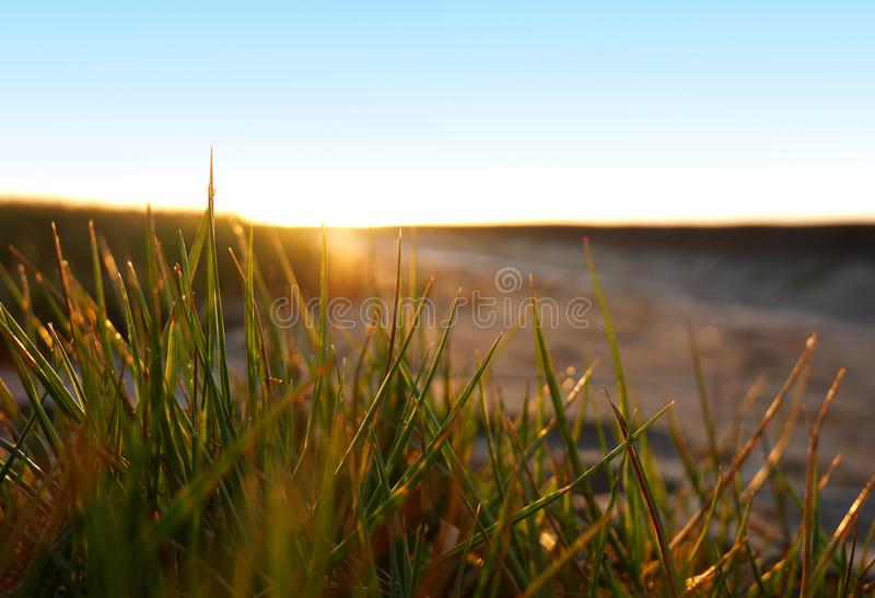 Grass in a sunset on the beach stock photos