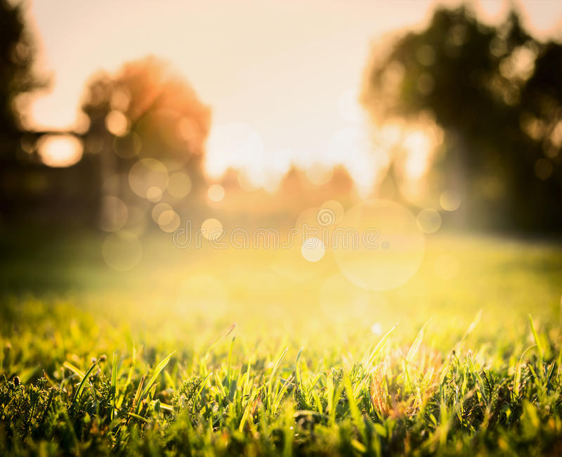 blurred outdoor backgrounds. Beautiful Outdoor Download Grass In Sunset Light Over Blurred Nature Background With Tree And  Bokeh Stock Photo  On Outdoor Backgrounds