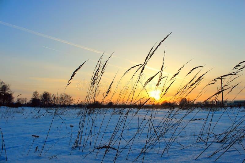 Grass on sunset in sunlight. Winter time stock photos