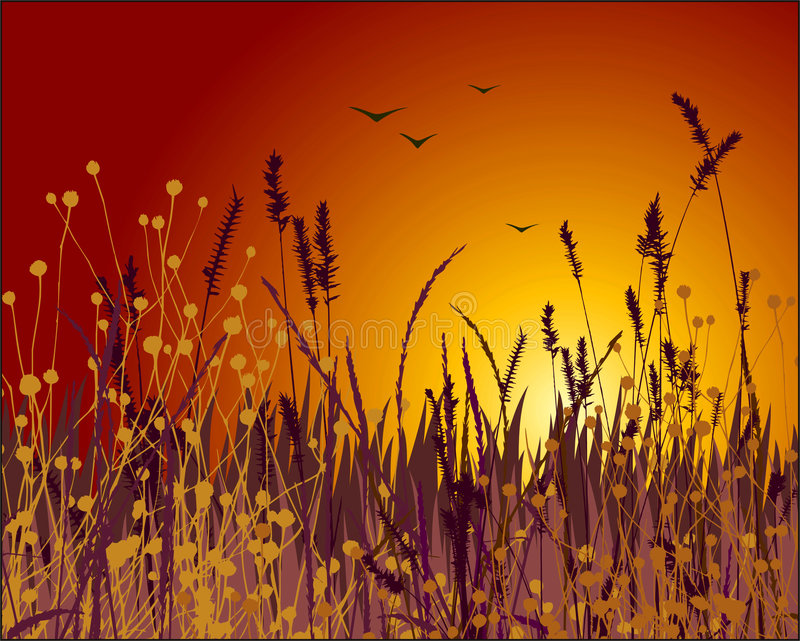 Grass And Sunset Vector Stock Photos