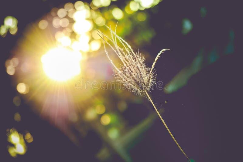 Grass on sunset stock image