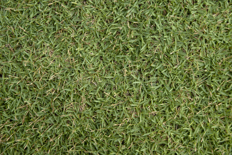 Download Grass Texture Royalty Free Stock Photography - Image: 15004517