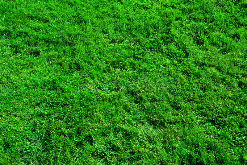 Download Grass texture stock image. Image of nature, soccer, backgrounds - 3228007