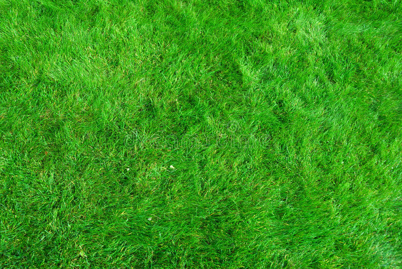 Download Grass texture stock image. Image of golf, pattern, green - 3228069