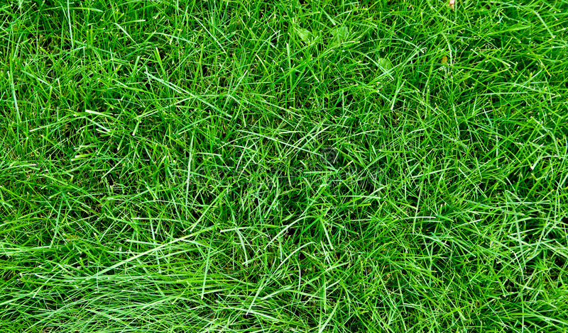 Download Grass texture stock image. Image of field, environmental - 3243469