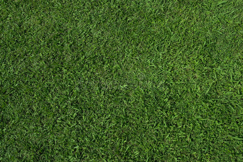 Download Grass Texture (zenith) Stock Photography - Image: 527582