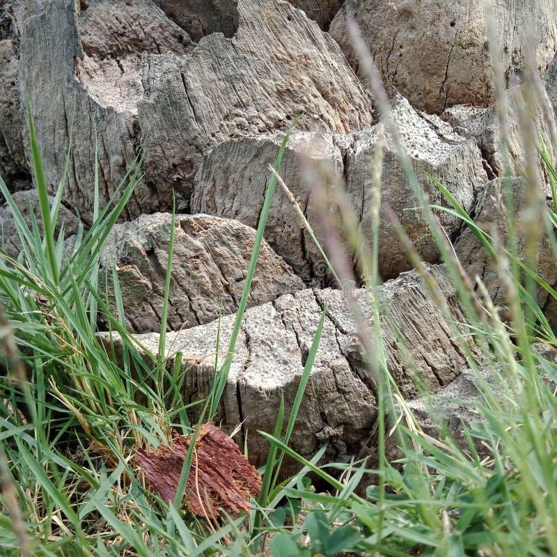 The Grass around tree. Grass tgrass thgrass thegrass around tree royalty free stock image