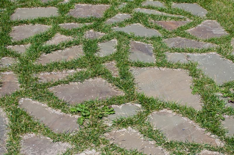 Grass between the tiles of the sidewalk path. stock image