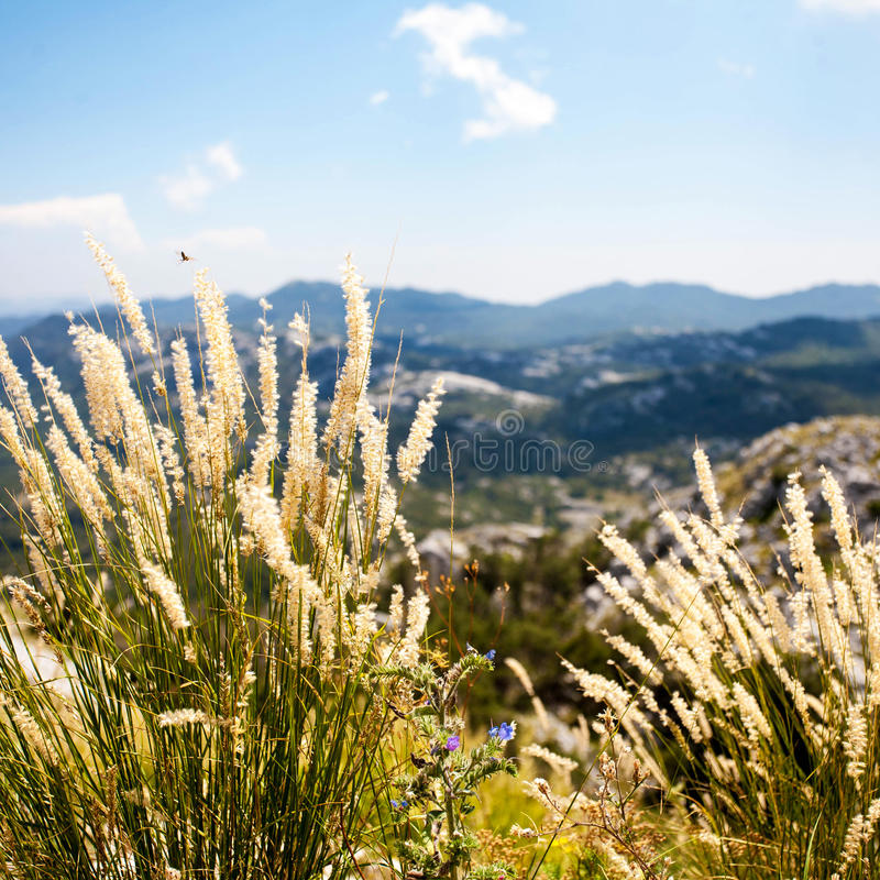 The grass on the top of Mount Lovcen, Montenegro. View from Mount Lovcen, Montenegro royalty free stock images