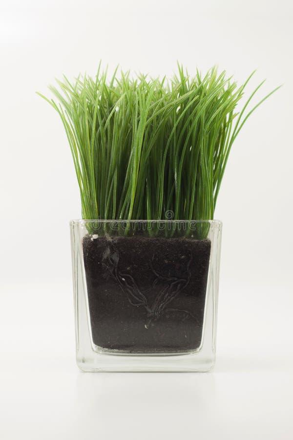 , grass in transparent rectangular glass vase. stock photos