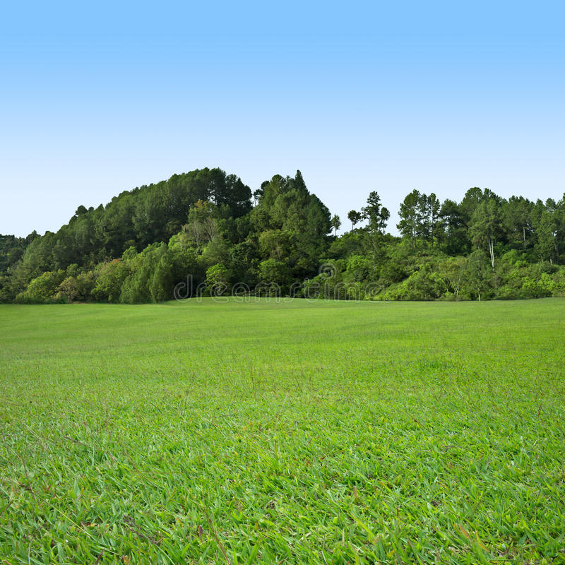 Download Grass And Tree On Blue Sky Royalty Free Stock Images - Image: 21425359