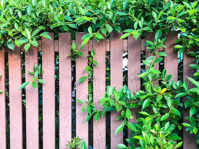 Grass brown lath wall background, fence decorate. Grass and tree branches on brown lath wall background, fence decorate stock photo