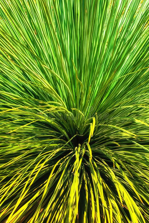 Grass tree detail stock images