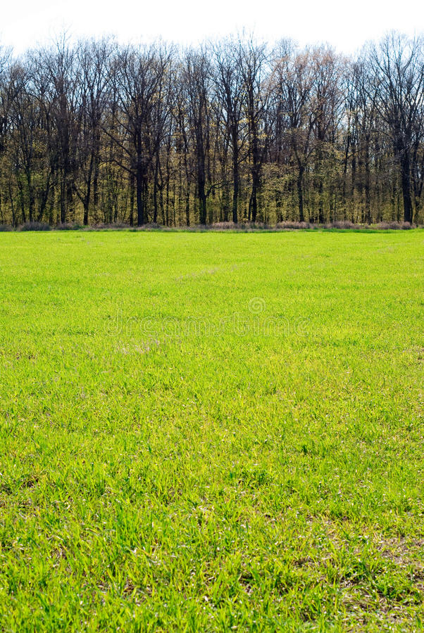 Download Grass and trees stock image. Image of grass, spring, color - 23426749