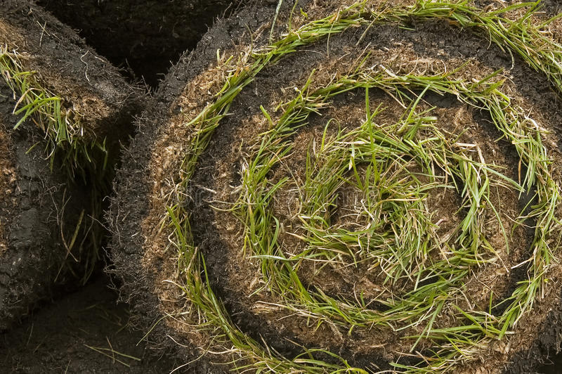 Download Grass turf stock photo. Image of roll, botanical, growing - 13613780