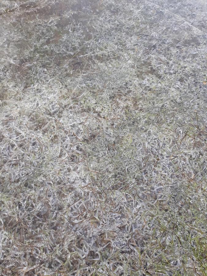 Grass under The ice royalty free stock photo