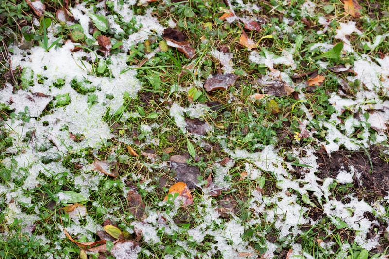 Grass under the snow. frozen plants in the garden.change of weather. Cold stock photos