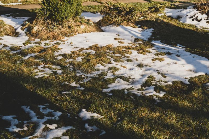 Grass under the snow. snow in summer. Nature background, cold, fresh, frost, frozen, green, ice, outdoor, scene, season, snowy, white, field, frosty, icy royalty free stock photo