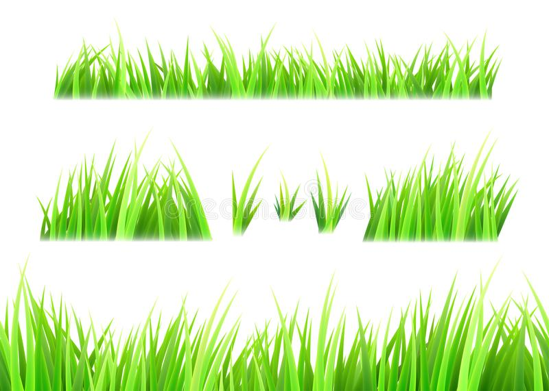 Grass vector isolated on white background. Tufts of grass. Green summer lawn set. Vector illustration royalty free illustration