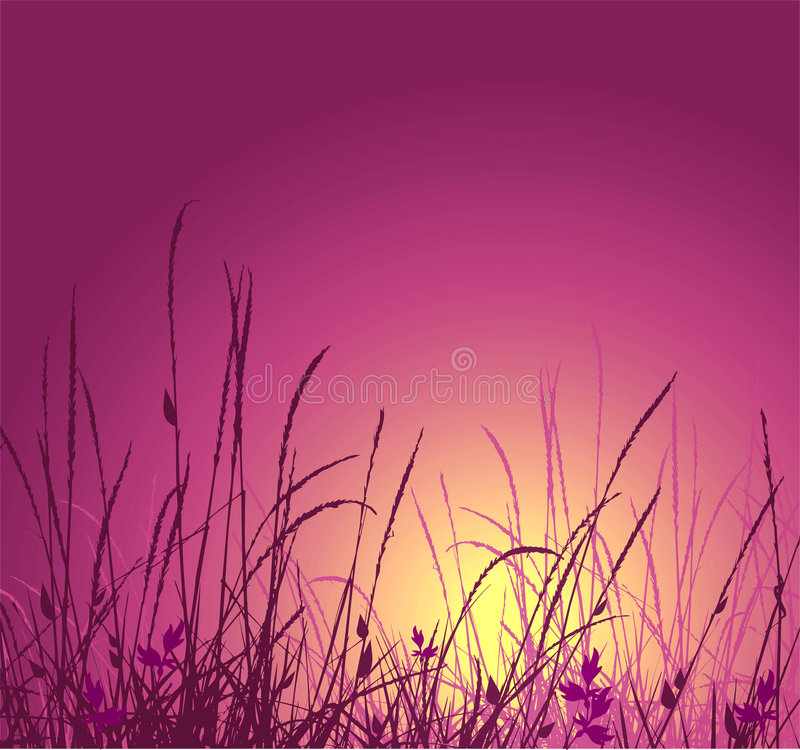 Grass vector silhouette and sunset stock illustration