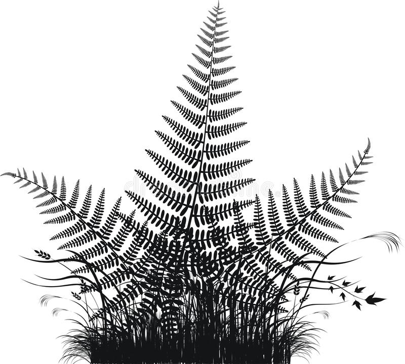 Free Grass Vector Silhouette With Fern Leaves Stock Images - 9744234