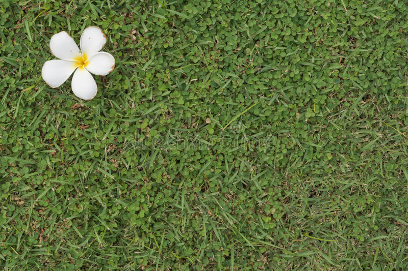 Grass version8 royalty free stock images