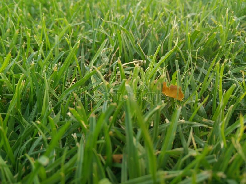 Grass 2 royalty free stock photos