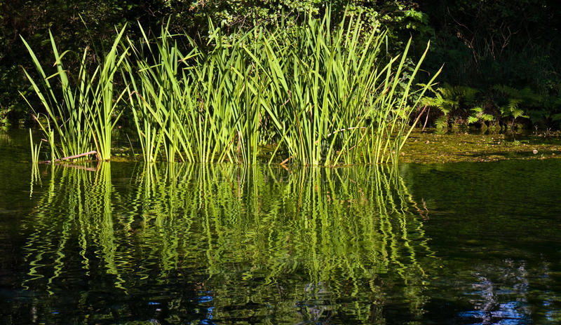 Grass in Water stock photo