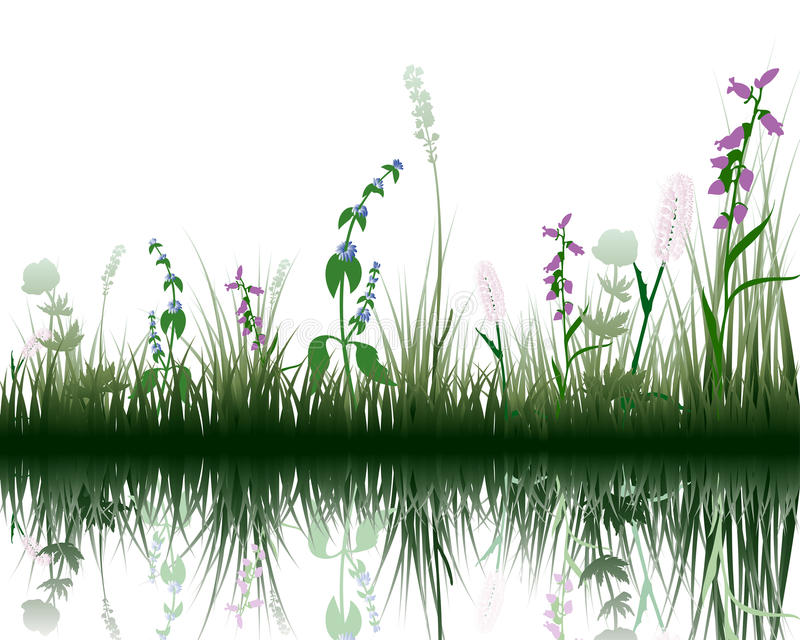 Grass on water vector illustration