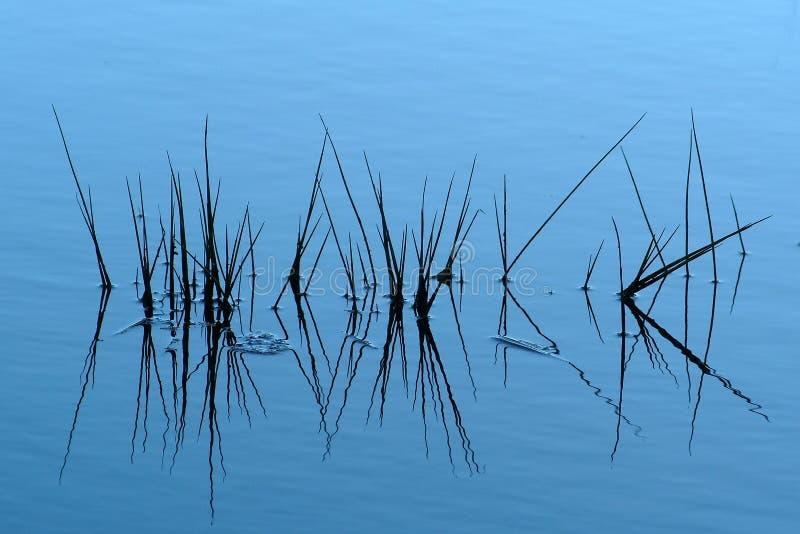 Download Grass water arkivfoto. Bild av gräs, natur, vatten, blommor - 281036