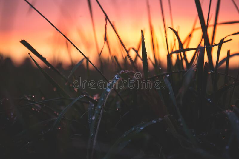 Grass With Water Drops During Sunset Free Public Domain Cc0 Image