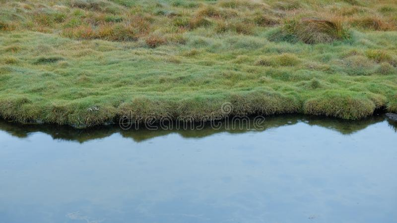Grass and water in the morning. In Iceland royalty free stock photos