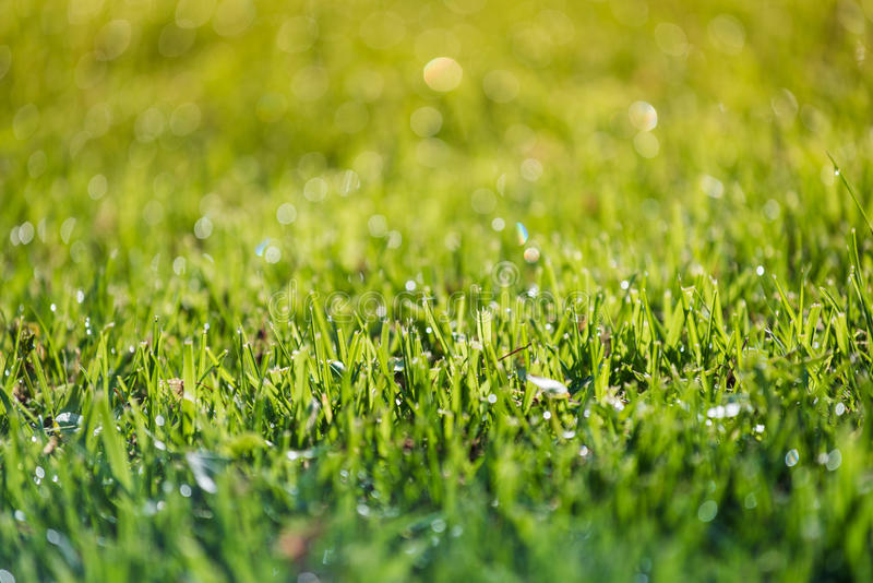 Grass and water in small depht of field intentionally. Blur stock photos