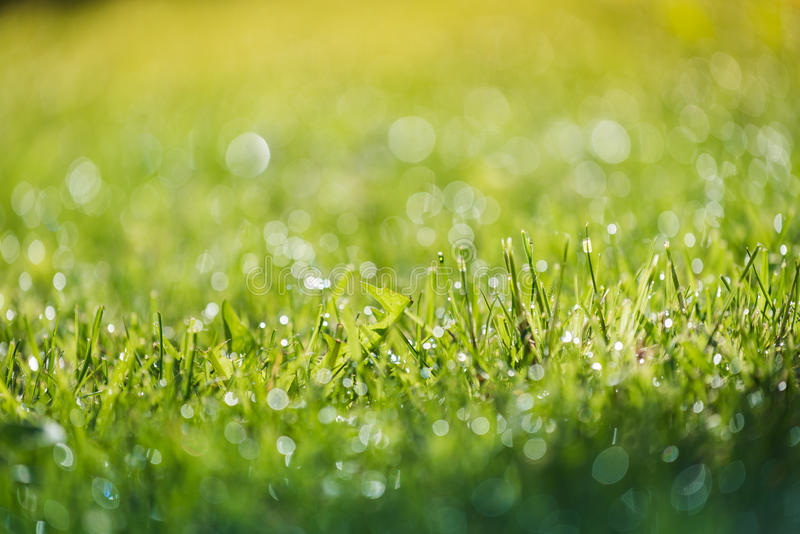 Grass and water in small depht of field intentionally. Blur royalty free stock images